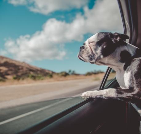 http://veterinaryhospitaltampa.com/wp-content/uploads/2018/02/thumbnail_avi-richards-438741-unsplash-458x436.jpg